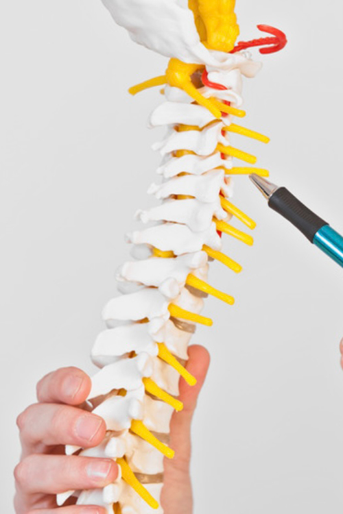 Chiropractic Portland OR Spine
